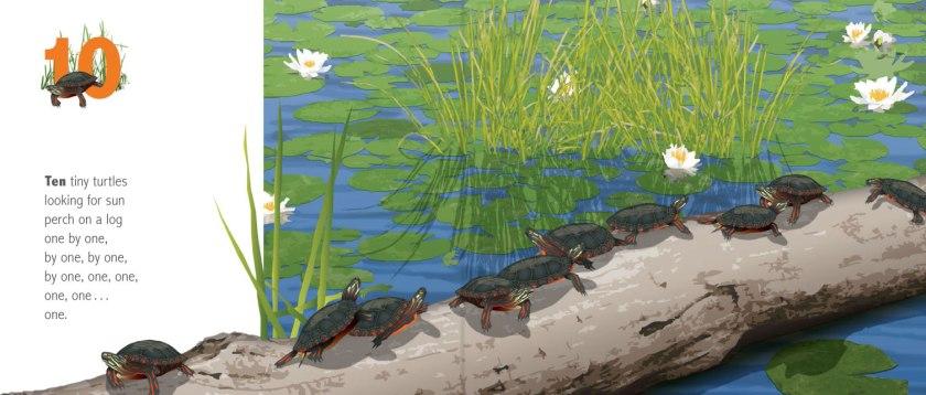 Ten-Tiny-Turtles